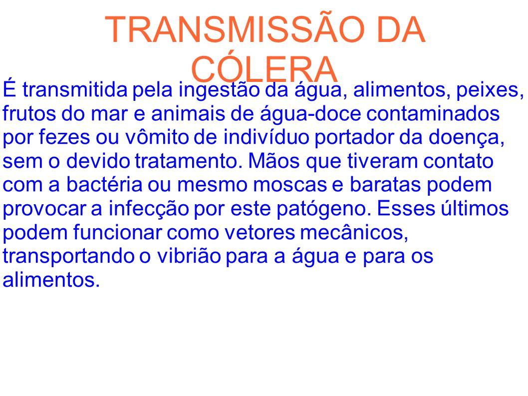 TRANSMISSÃO DA CÓLERA