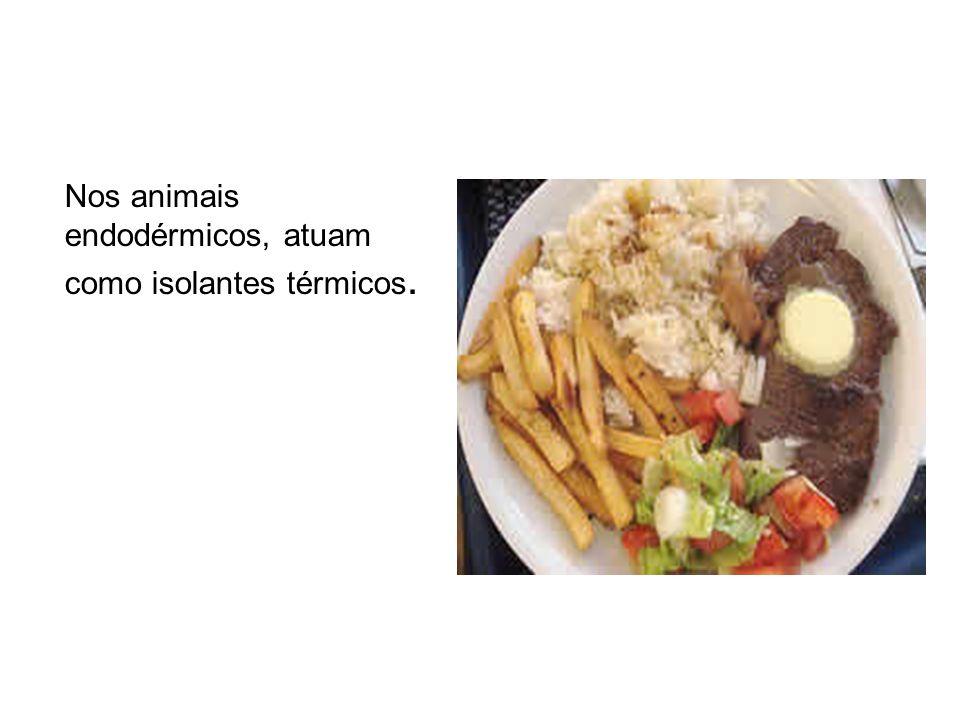 Nos animais endodérmicos, atuam como isolantes térmicos.