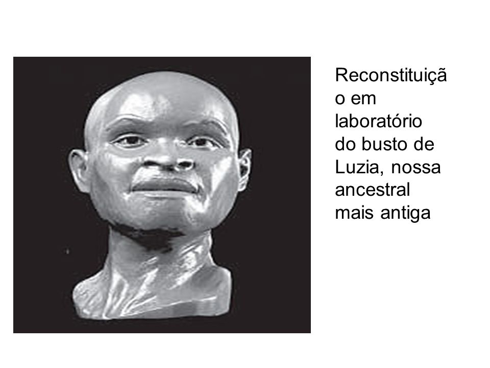 Reconstituição em laboratório do busto de Luzia, nossa ancestral mais antiga