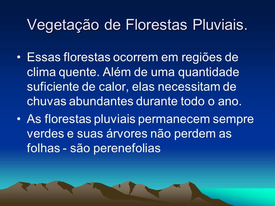 Vegetação de Florestas Pluviais.