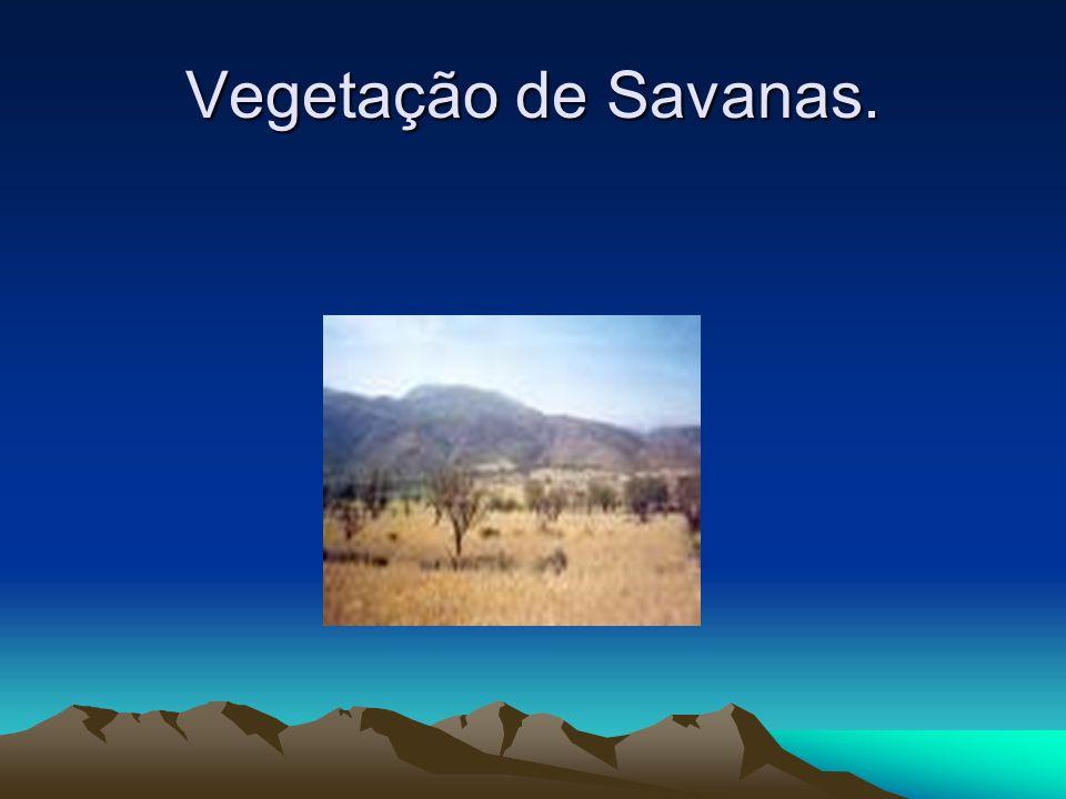 Vegetação de Savanas.