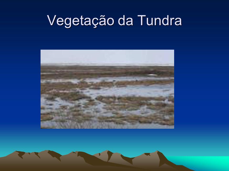 Vegetação da Tundra