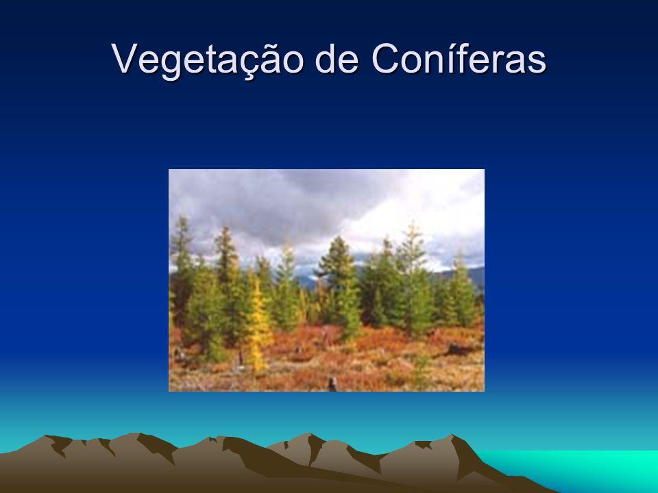 Vegetação de Coníferas