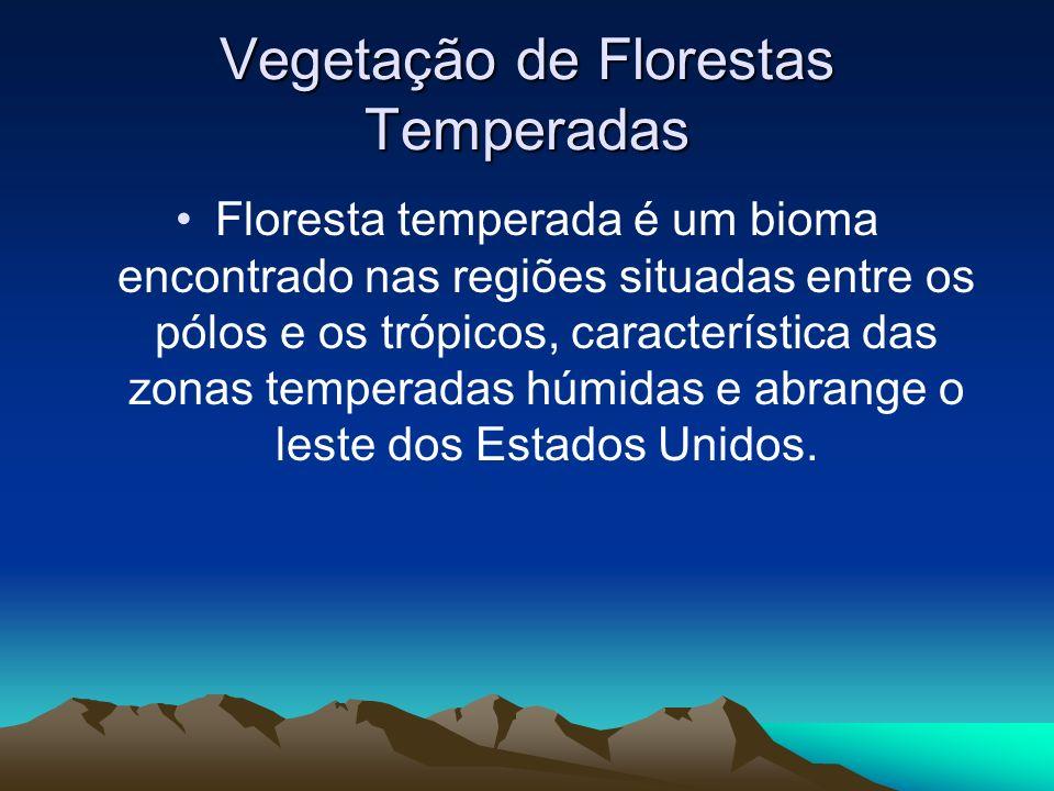 Vegetação de Florestas Temperadas