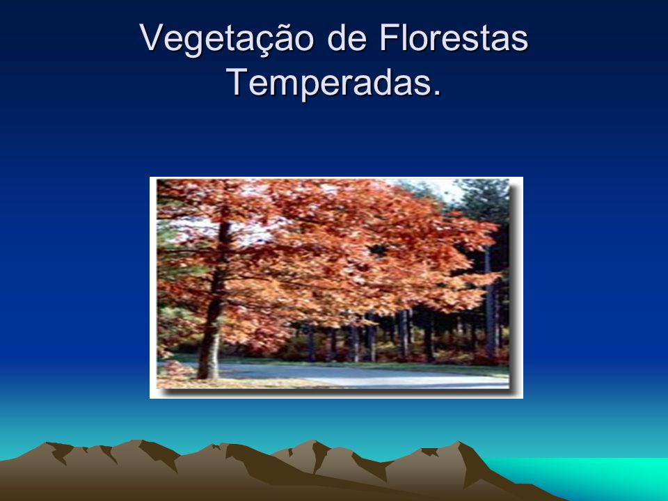 Vegetação de Florestas Temperadas.