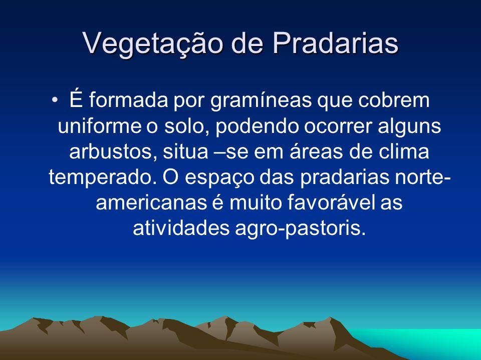 Vegetação de Pradarias