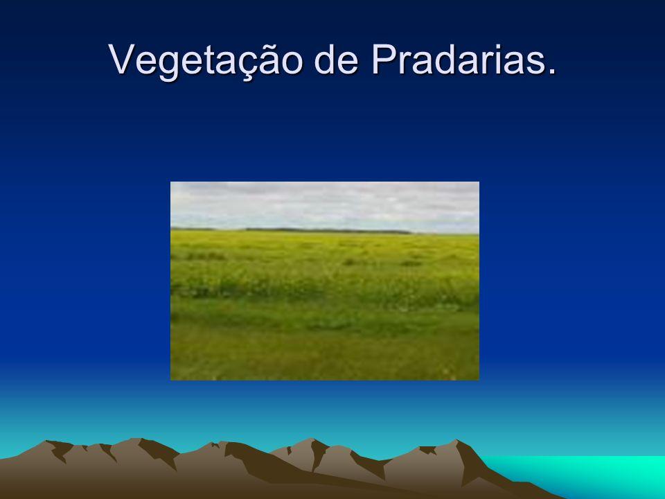 Vegetação de Pradarias.