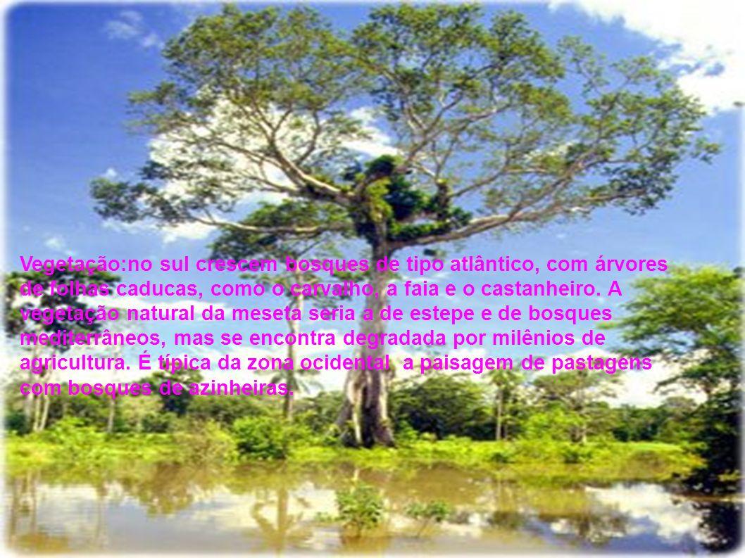 Vegetação:no sul crescem bosques de tipo atlântico, com árvores de folhas caducas, como o carvalho, a faia e o castanheiro.