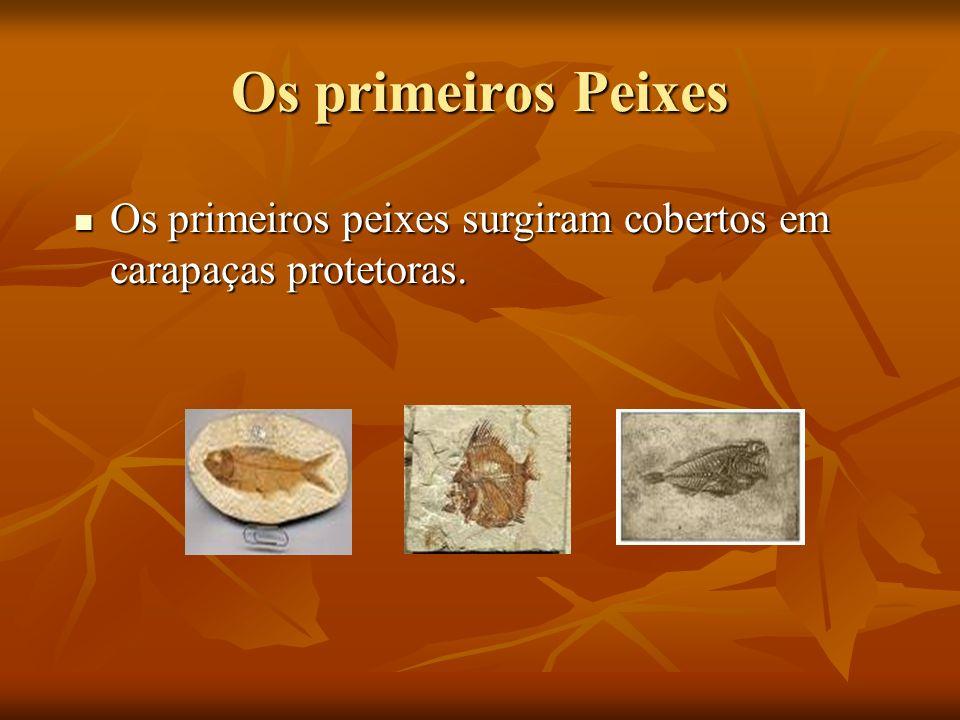 Os primeiros Peixes Os primeiros peixes surgiram cobertos em carapaças protetoras.