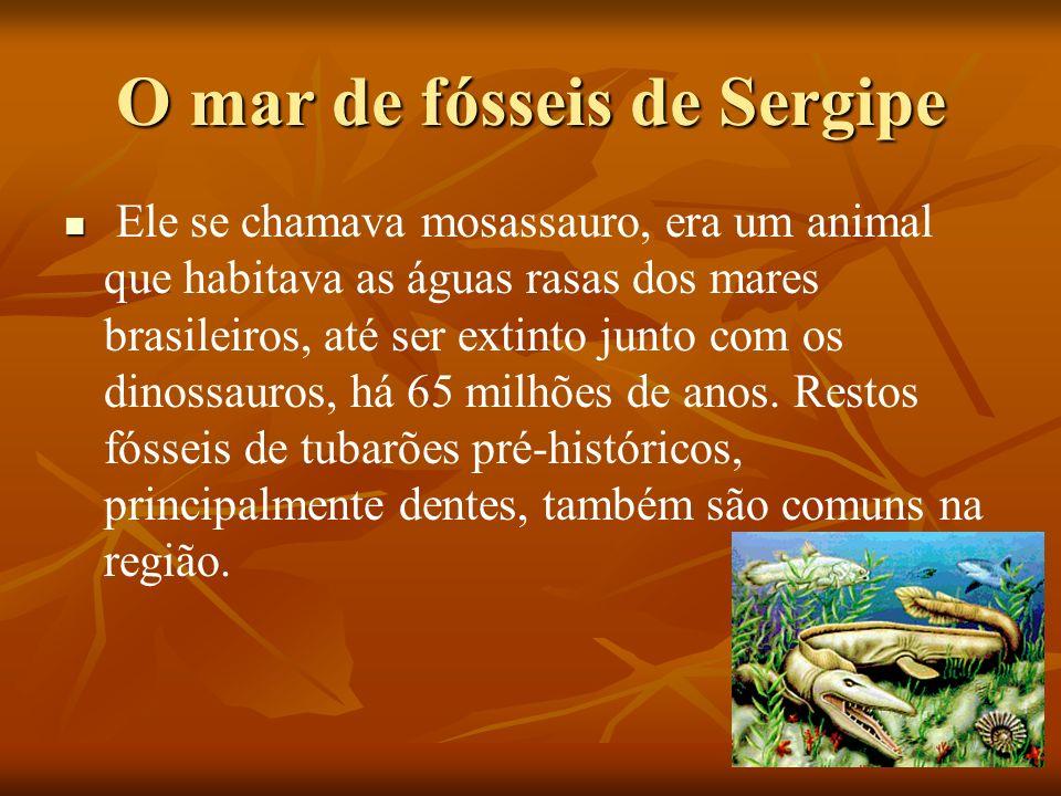 O mar de fósseis de Sergipe
