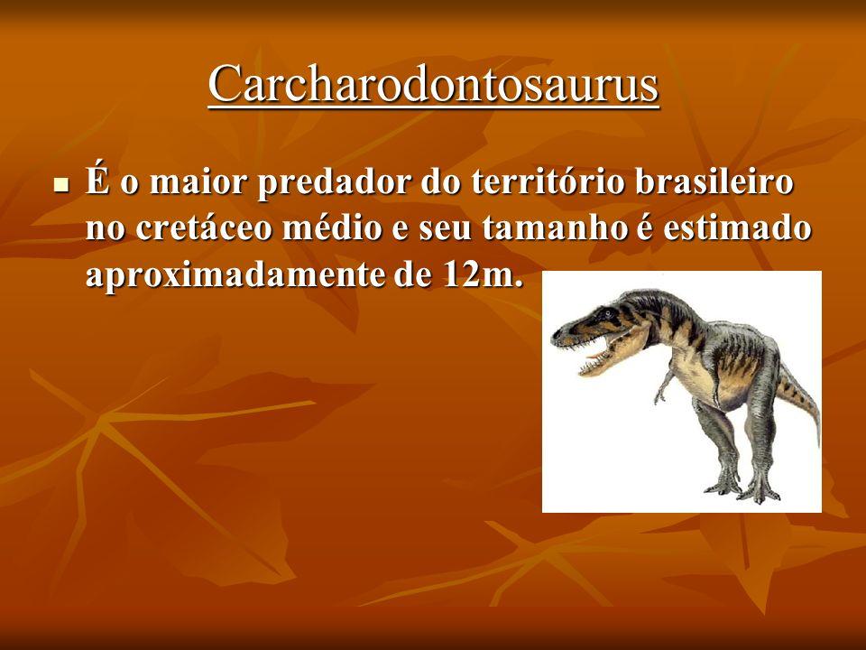 Carcharodontosaurus É o maior predador do território brasileiro no cretáceo médio e seu tamanho é estimado aproximadamente de 12m.