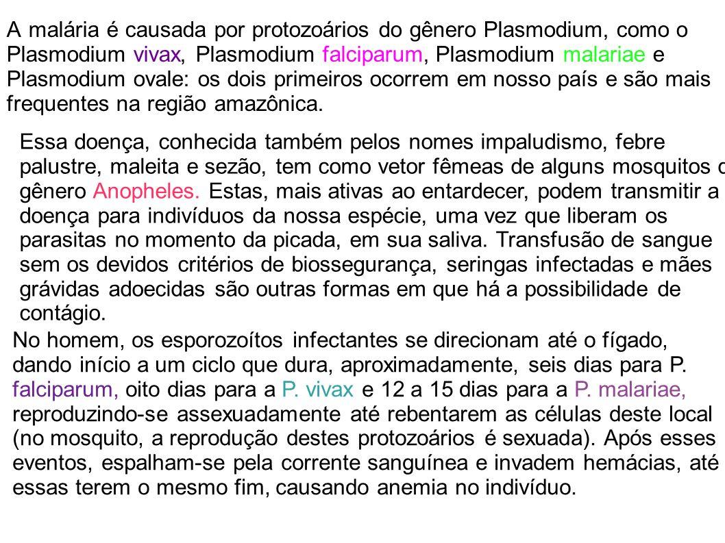 A malária é causada por protozoários do gênero Plasmodium, como o Plasmodium vivax, Plasmodium falciparum, Plasmodium malariae e Plasmodium ovale: os dois primeiros ocorrem em nosso país e são mais frequentes na região amazônica.