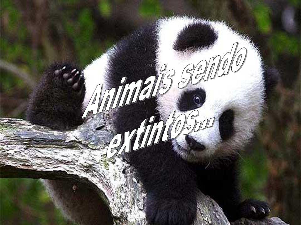 Animais sendo extintos...