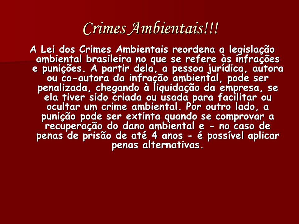Crimes Ambientais!!!