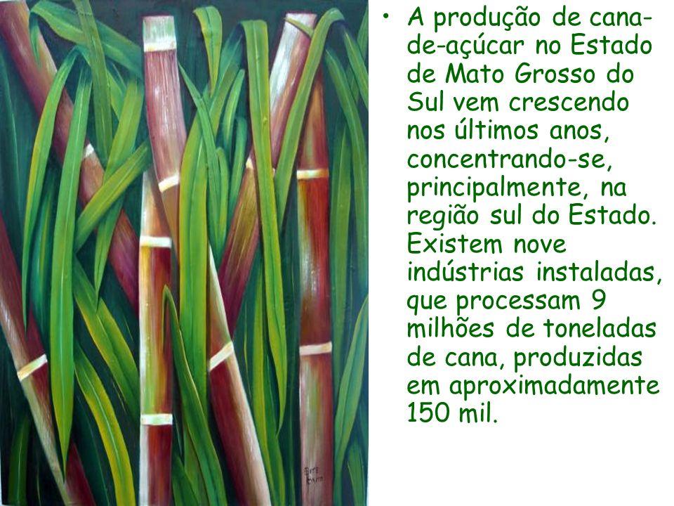 A produção de cana-de-açúcar no Estado de Mato Grosso do Sul vem crescendo nos últimos anos, concentrando-se, principalmente, na região sul do Estado.