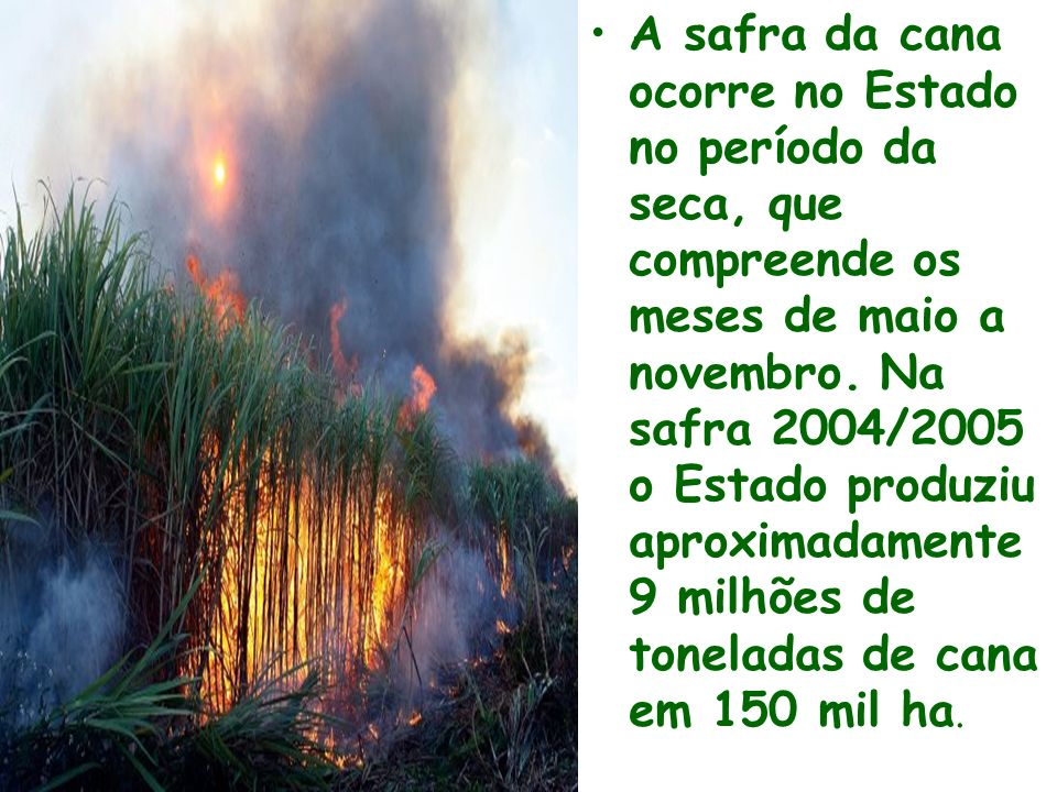 A safra da cana ocorre no Estado no período da seca, que compreende os meses de maio a novembro.