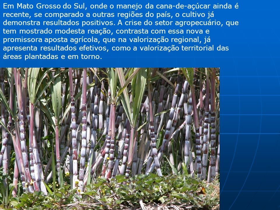 Em Mato Grosso do Sul, onde o manejo da cana-de-açúcar ainda é recente, se comparado a outras regiões do país, o cultivo já demonstra resultados positivos.