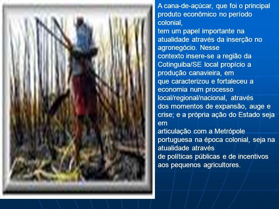 A cana-de-açúcar, que foi o principal produto econômico no período colonial,