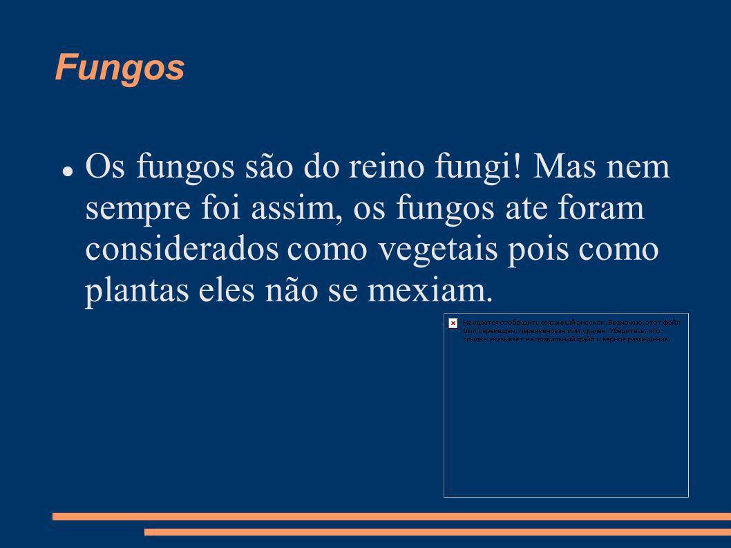 FungosOs fungos são do reino fungi.
