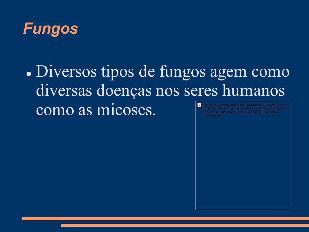Fungos Diversos tipos de fungos agem como diversas doenças nos seres humanos como as micoses.