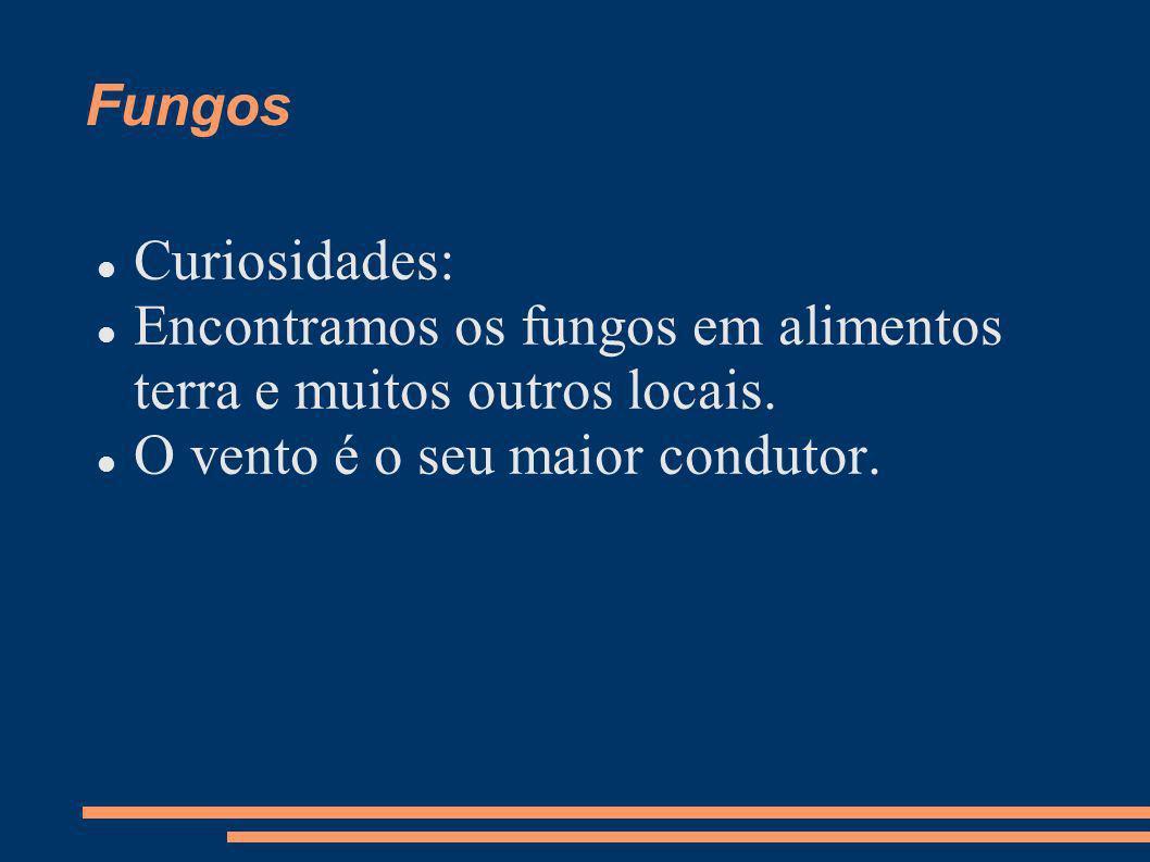 Fungos Curiosidades: Encontramos os fungos em alimentos terra e muitos outros locais.