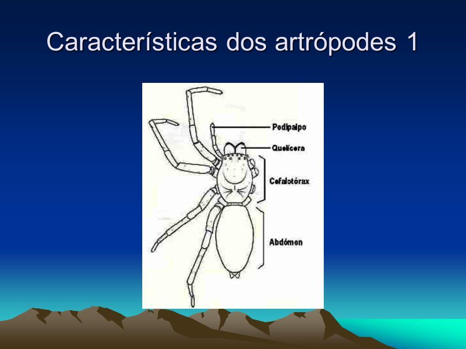 Características dos artrópodes 1