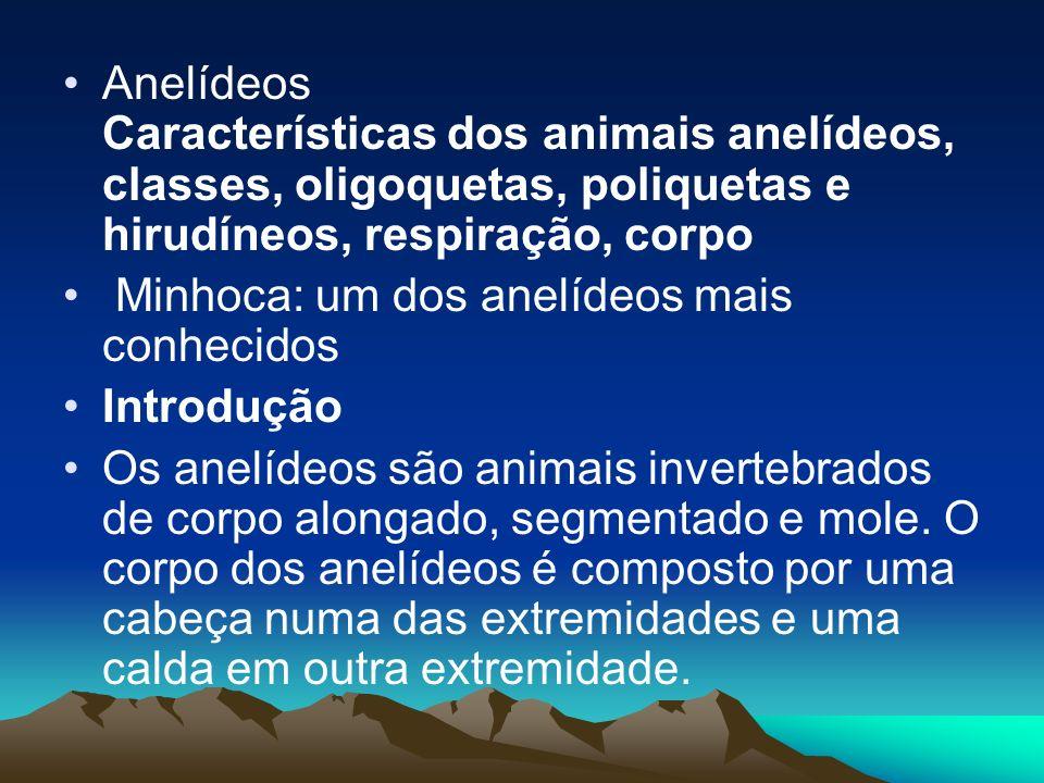Anelídeos Características dos animais anelídeos, classes, oligoquetas, poliquetas e hirudíneos, respiração, corpo