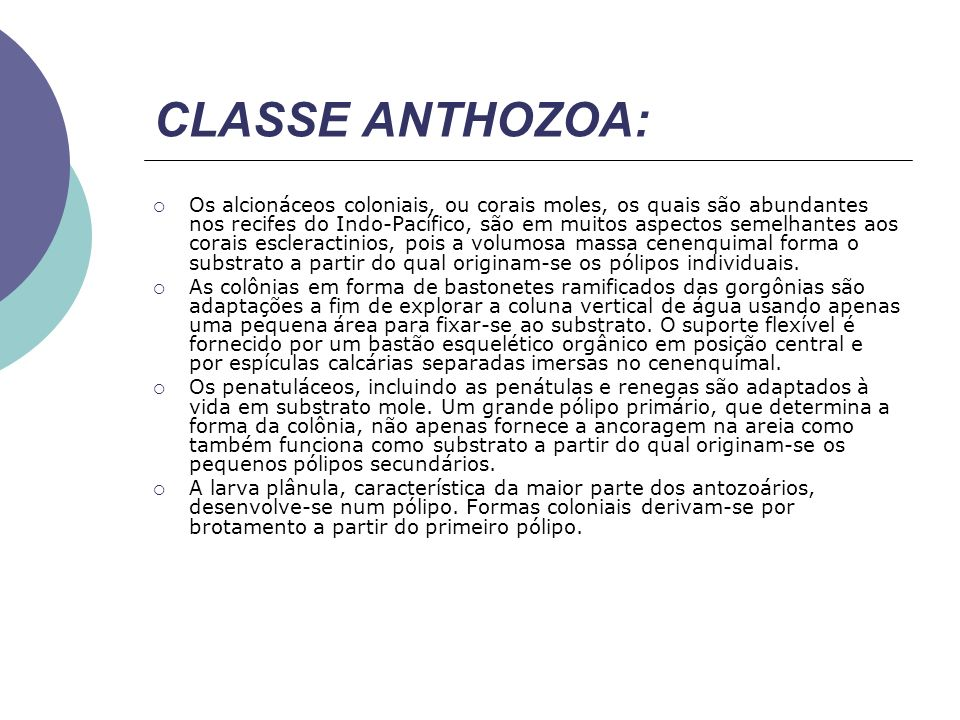 CLASSE ANTHOZOA: