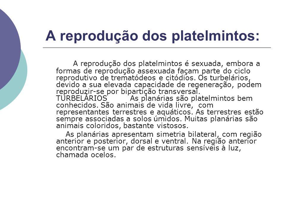 A reprodução dos platelmintos: