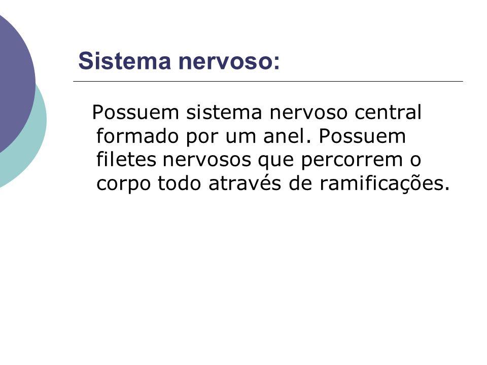 Sistema nervoso: Possuem sistema nervoso central formado por um anel.