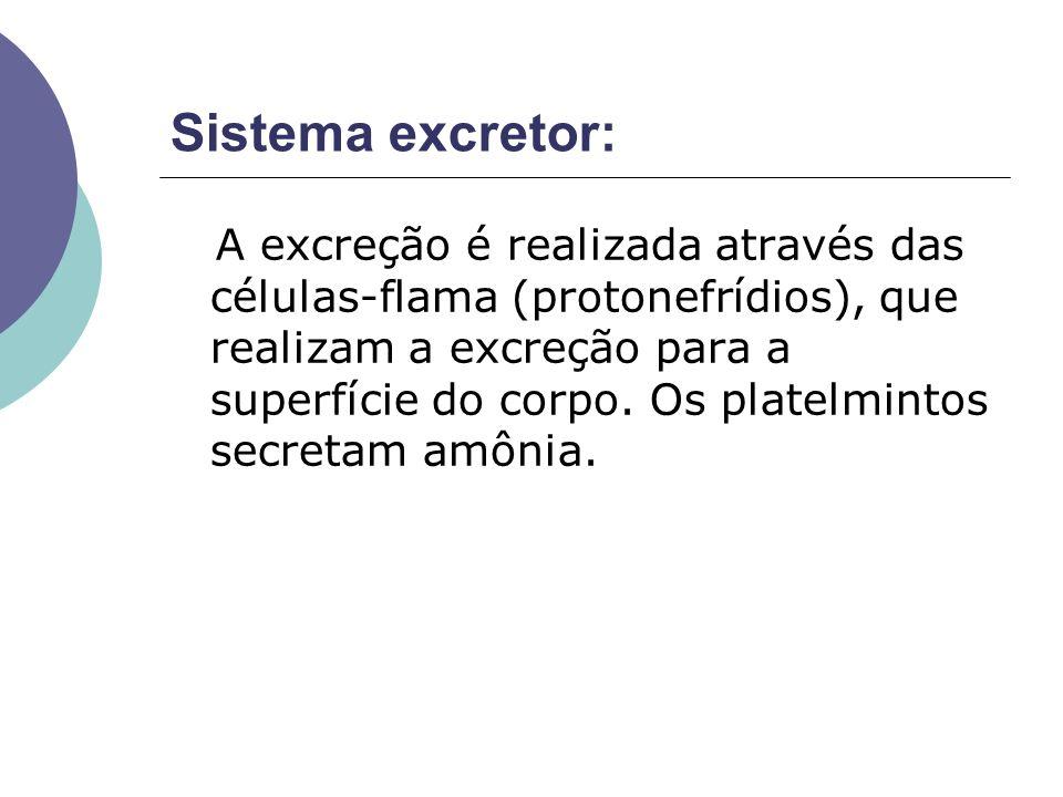 Sistema excretor: