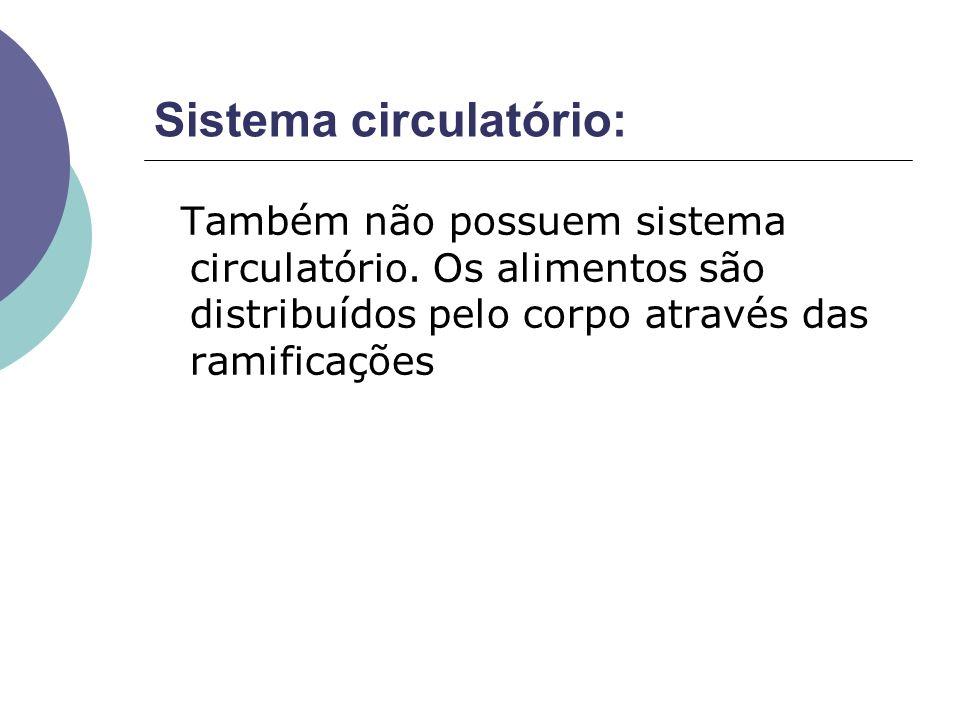 Sistema circulatório: