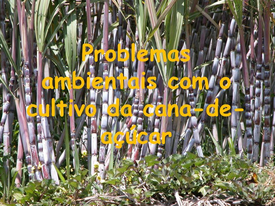 Problemas ambientais com o cultivo da cana-de-açúcar