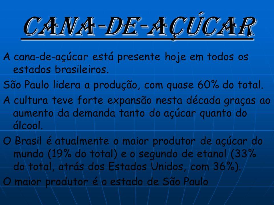 Cana-de-açúcar A cana-de-açúcar está presente hoje em todos os estados brasileiros. São Paulo lidera a produção, com quase 60% do total.