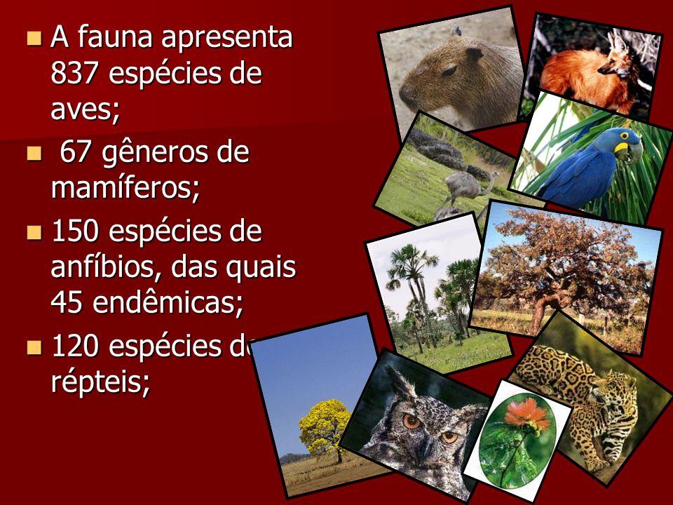 A fauna apresenta 837 espécies de aves;