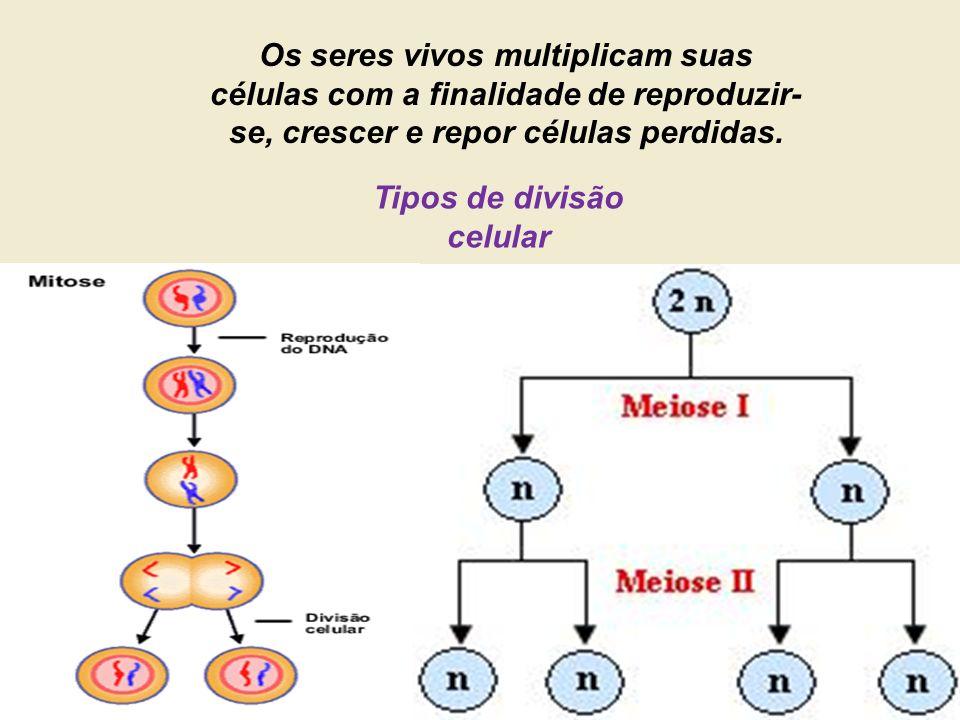 Tipos de divisão celular