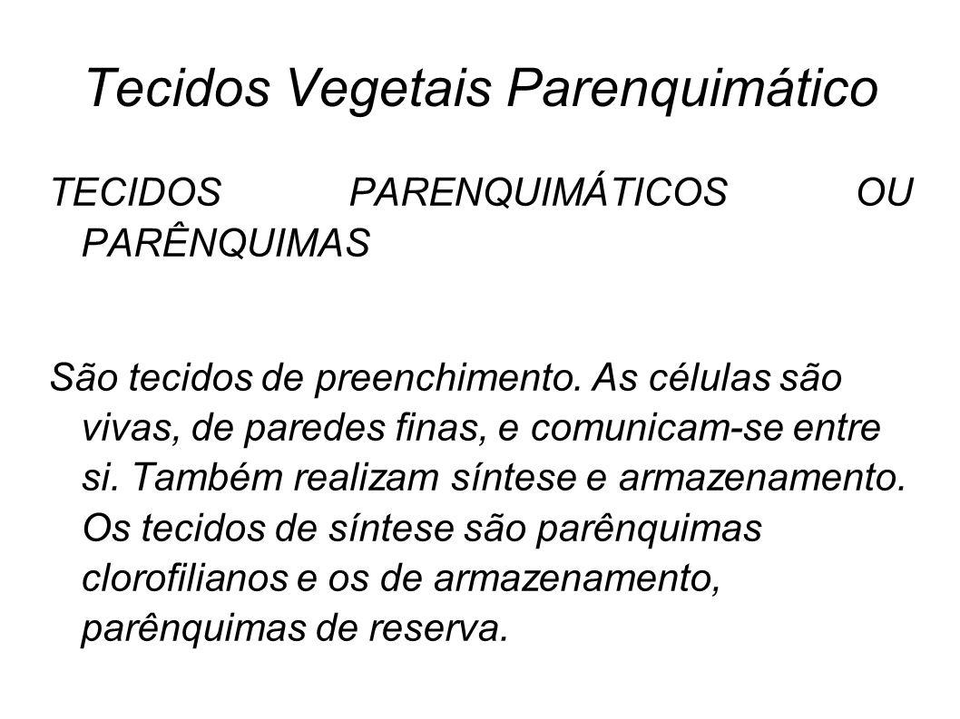 Tecidos Vegetais Parenquimático