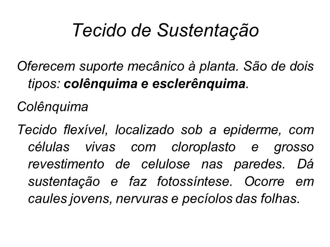 Tecido de Sustentação Oferecem suporte mecânico à planta. São de dois tipos: colênquima e esclerênquima.