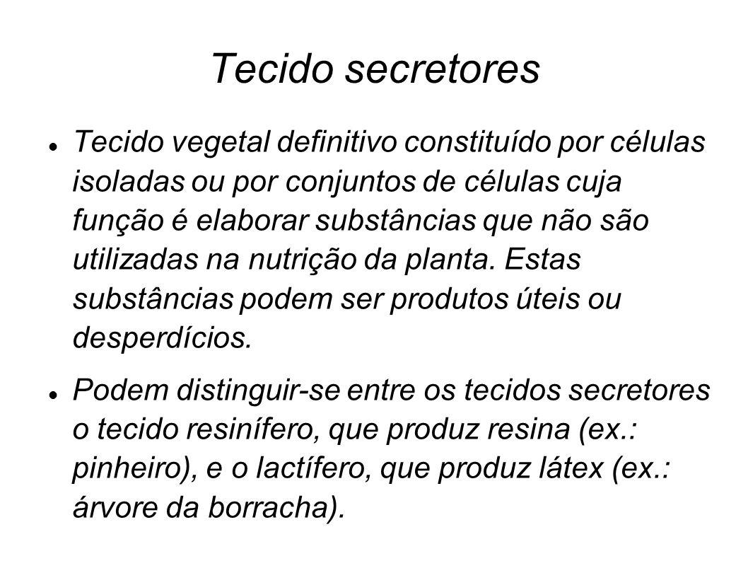 Tecido secretores