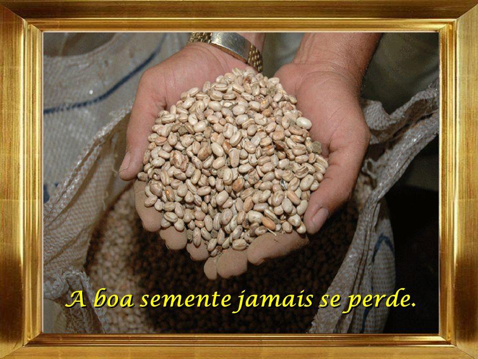A boa semente jamais se perde.