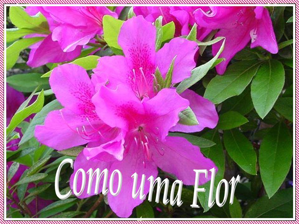 Como uma Flor