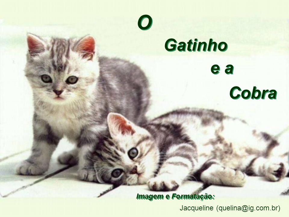 O Gatinho e a Cobra Imagem e Formatação: