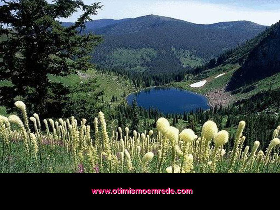 www.otimismoemrede.com