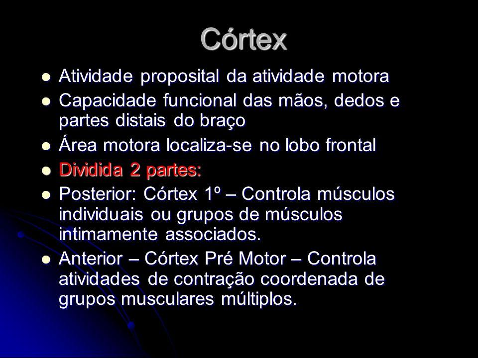 Córtex Atividade proposital da atividade motora