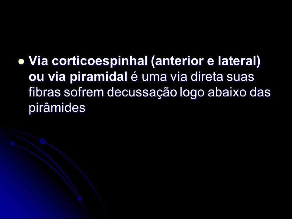 Via corticoespinhal (anterior e lateral) ou via piramidal é uma via direta suas fibras sofrem decussação logo abaixo das pirâmides