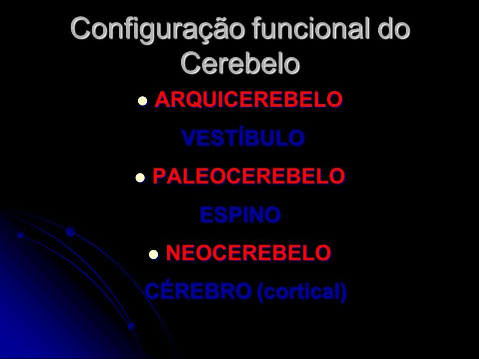 Configuração funcional do Cerebelo