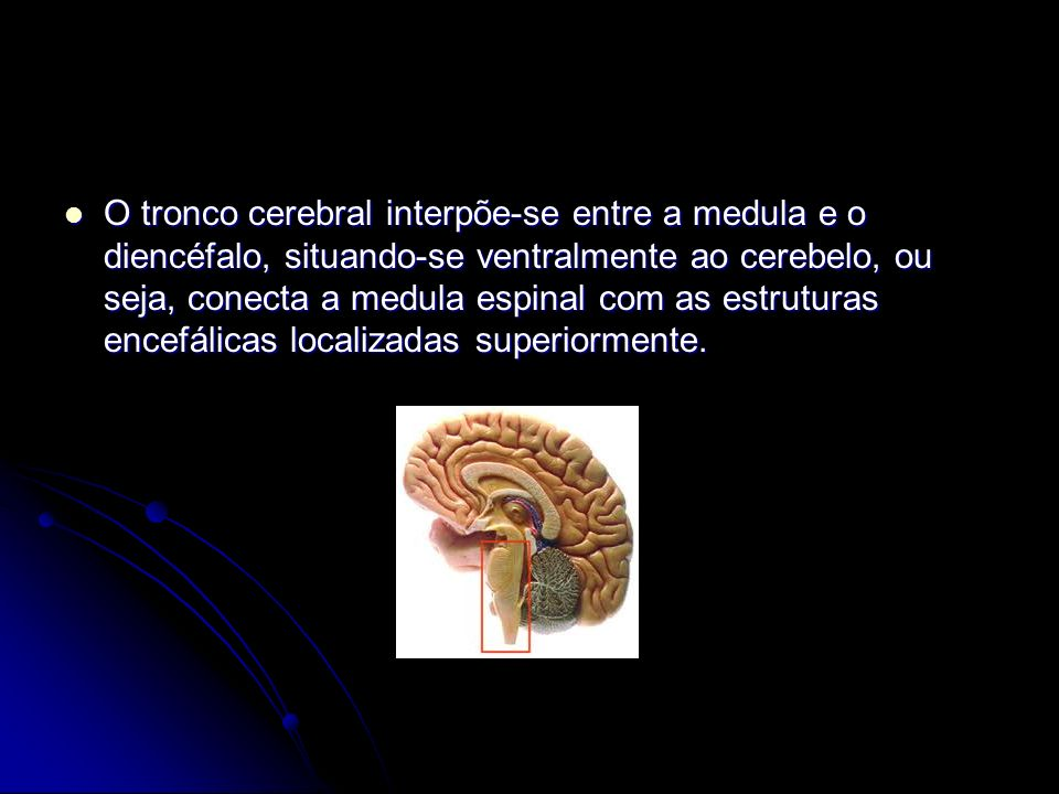 O tronco cerebral interpõe-se entre a medula e o diencéfalo, situando-se ventralmente ao cerebelo, ou seja, conecta a medula espinal com as estruturas encefálicas localizadas superiormente.