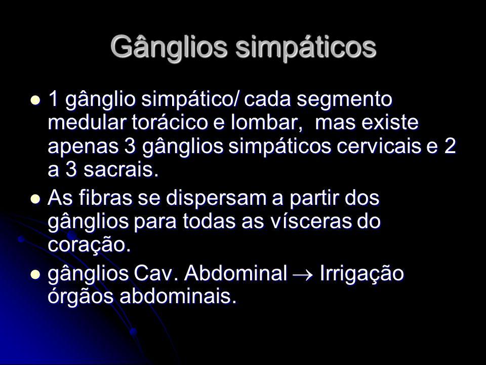 Gânglios simpáticos 1 gânglio simpático/ cada segmento medular torácico e lombar, mas existe apenas 3 gânglios simpáticos cervicais e 2 a 3 sacrais.