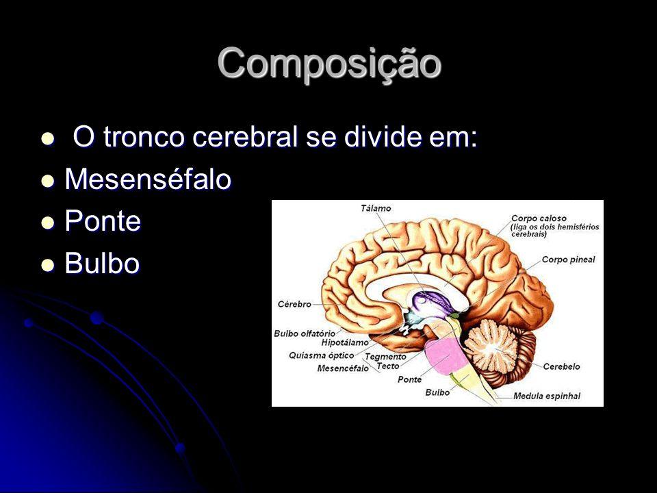 Composição O tronco cerebral se divide em: Mesenséfalo Ponte Bulbo