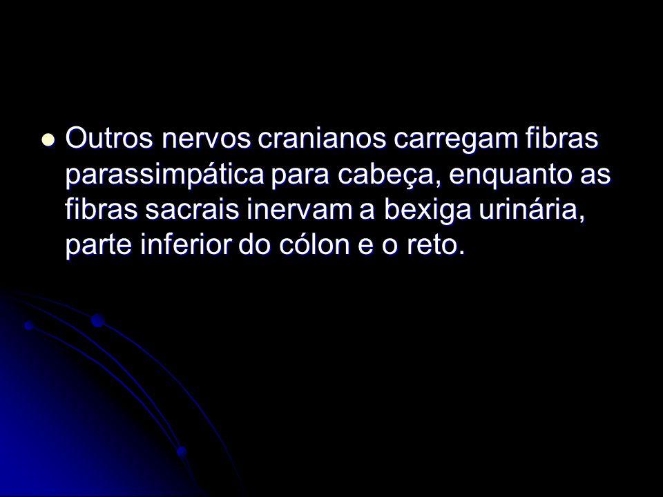 Outros nervos cranianos carregam fibras parassimpática para cabeça, enquanto as fibras sacrais inervam a bexiga urinária, parte inferior do cólon e o reto.